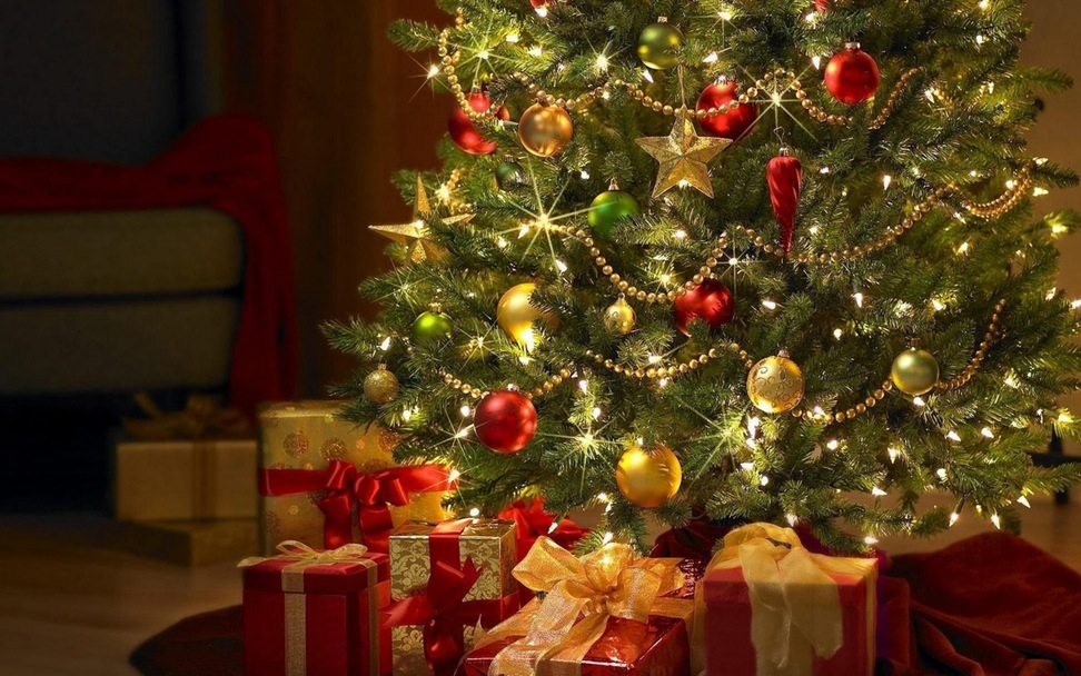 What All You Should Know About The Christmas Trees?