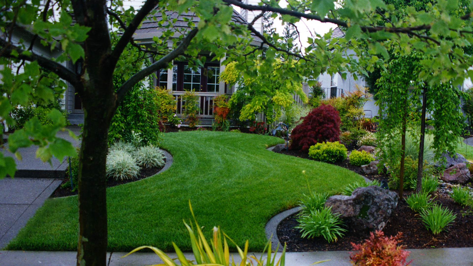 Everything You Need To Know About Natural Lawns