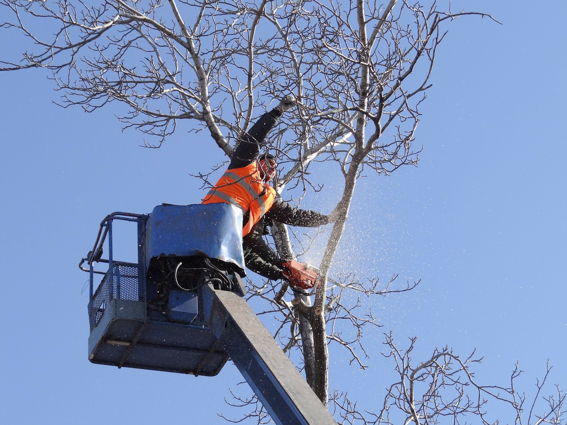 Benefits Of Having A Tree Surgeon By Your Side