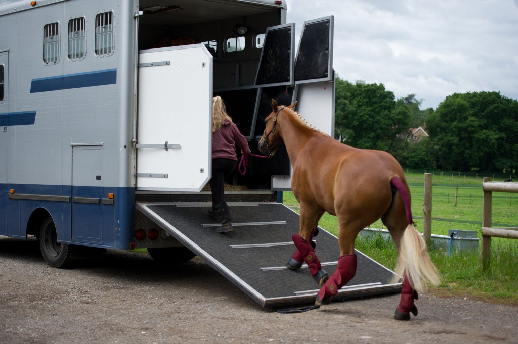 Secrets You Need To Know While Buying Perfect Horse Trailer